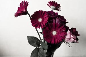 花瓶に挿したガーベラとバラの写真素材 [FYI00210606]