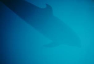 イルカの写真素材 [FYI00210651]