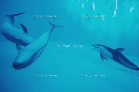 イルカの写真素材 [FYI00210654]