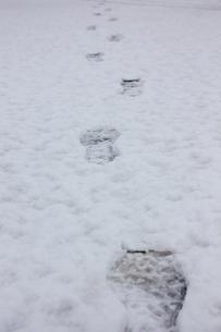 雪の上の足跡の素材 [FYI00210762]