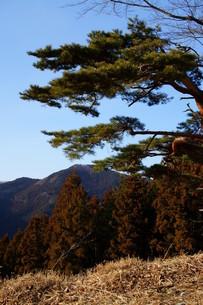 松と空の写真素材 [FYI00211574]