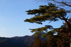 松と空の写真素材 [FYI00211575]