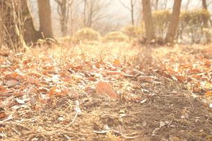 落ち葉の写真素材 [FYI00211588]