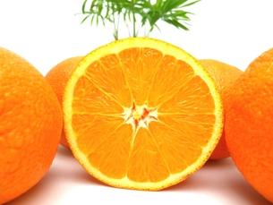 オレンジの写真素材 [FYI00211660]