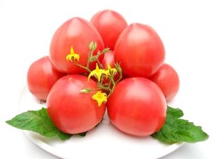 トマトの写真素材 [FYI00211672]