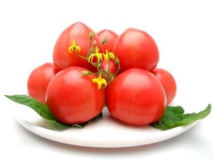トマトの写真素材 [FYI00211673]