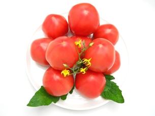トマトの写真素材 [FYI00211692]
