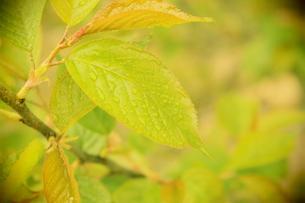 新緑 トイカメラ風の写真素材 [FYI00211782]