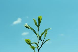 新緑の写真素材 [FYI00211839]