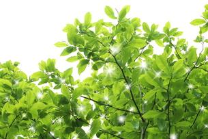 新緑の写真素材 [FYI00211847]
