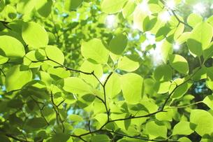 新緑の写真素材 [FYI00211848]