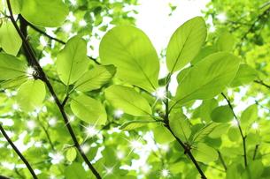 新緑の写真素材 [FYI00211852]