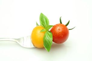 トマトの写真素材 [FYI00212036]