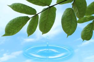 葉っぱと水の波紋の写真素材 [FYI00212060]