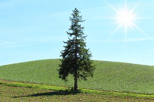 クリスマスツリーの木の写真素材 [FYI00212070]