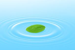 水面に浮かぶ葉っぱの写真素材 [FYI00212073]