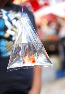 祭りの屋台、金魚すくい の写真素材 [FYI00212269]