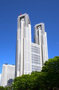 東京都庁 青空と緑の写真素材 [FYI00212298]