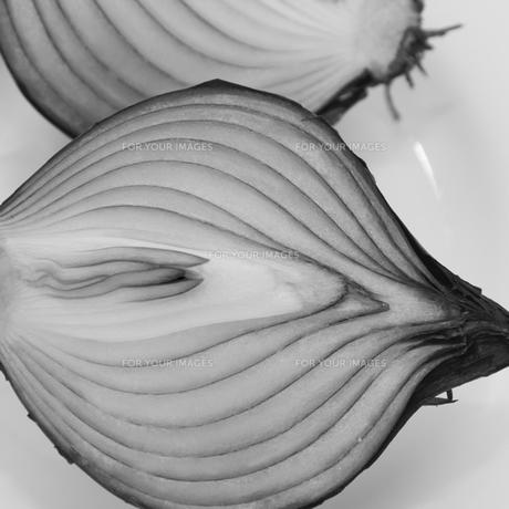 タマネギ(モノクロ)の写真素材 [FYI00212883]
