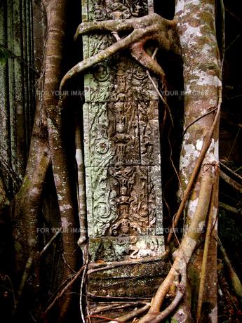 ガジュマルに侵食される遺跡。ベンメリアの素材 [FYI00212975]