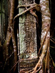 ガジュマルに侵食される遺跡。ベンメリアの写真素材 [FYI00212975]