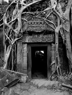 侵食される遺跡 タ・プロムの写真素材 [FYI00212979]