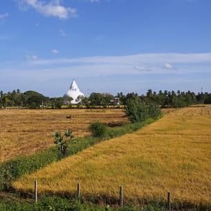 ティッサマハーラーマの風景の写真素材 [FYI00212999]