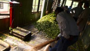 Tea Factoryの写真素材 [FYI00213051]