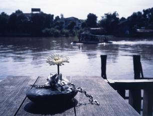 一差しの花の写真素材 [FYI00213157]