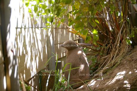 イエローアイペンギンの子供の写真素材 [FYI00213256]