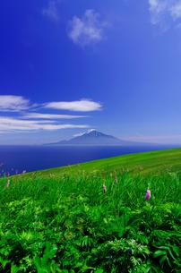 北海道礼文島 桃岩遊歩道から見える利尻島と花の写真素材 [FYI00213305]