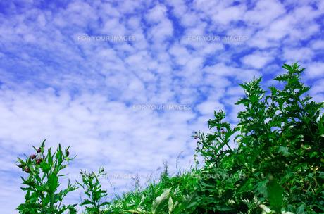 北海道礼文島 桃岩遊歩道から見えた青空に浮かぶ雲の写真素材 [FYI00213326]