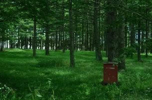 森林浴の写真素材 [FYI00213360]