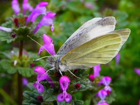 蝶と野の花の素材 [FYI00213609]
