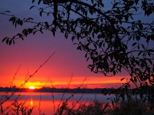 鳥屋野潟からの夕日の写真素材 [FYI00213650]