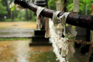 雨に濡れたおみくじの写真素材 [FYI00213698]