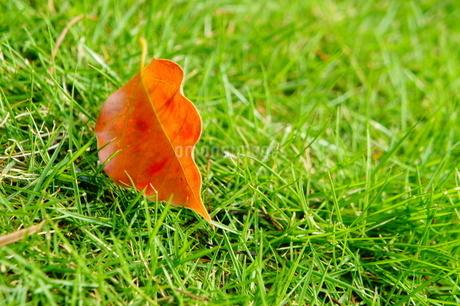 芝生に落ち葉の写真素材 [FYI00213734]