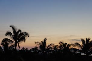 ハワイのヤシの木と空の素材 [FYI00213772]
