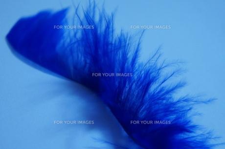 青い羽根の素材 [FYI00213778]