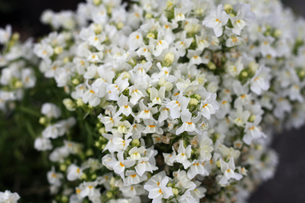 花の写真素材 [FYI00213883]