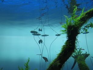 水中の写真素材 [FYI00213942]