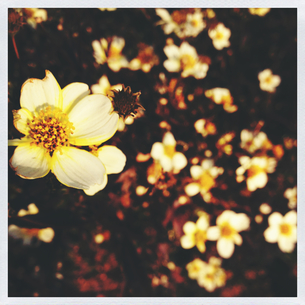 春の訪れの写真素材 [FYI00213954]