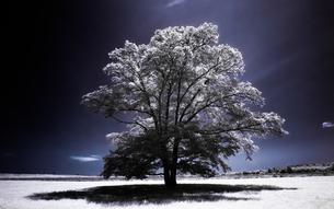 ハルニレの木の写真素材 [FYI00213988]