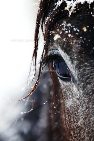 北国の馬の写真素材 [FYI00213990]