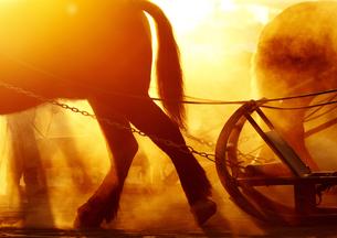 ばんえい競馬の朝の写真素材 [FYI00213994]