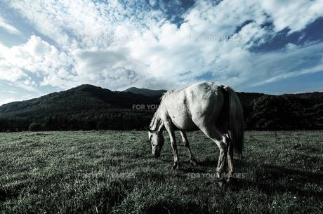 馬と大地の写真素材 [FYI00214017]