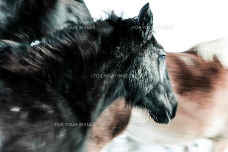走る馬の素材 [FYI00214095]
