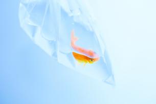 日本の祭りの写真素材 [FYI00214111]