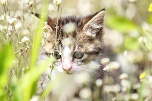 子猫の素材 [FYI00214112]