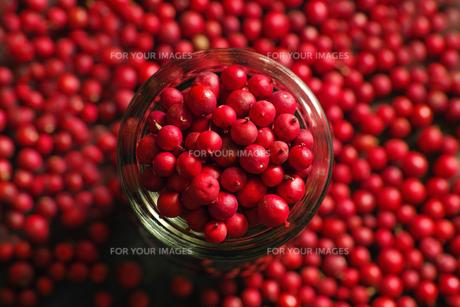 赤い実の素材 [FYI00214115]